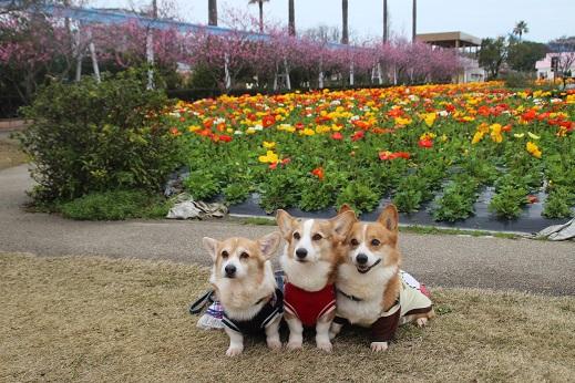 香椎花園2 2016-3-13-4