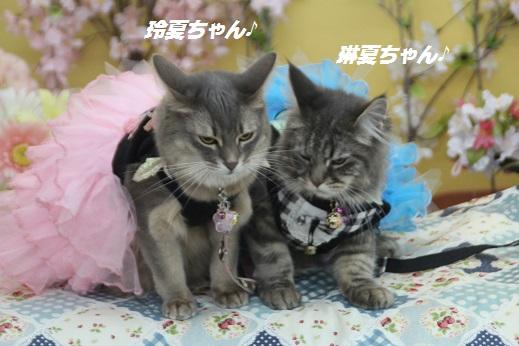 ららペット1 2016-3-27-3