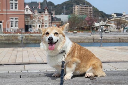 門司港散歩 2016-4-2-7