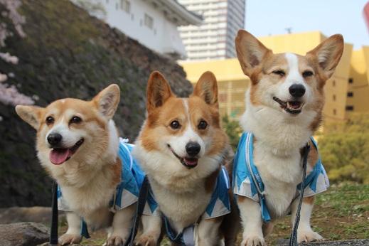 小倉城 2016-4-2-3