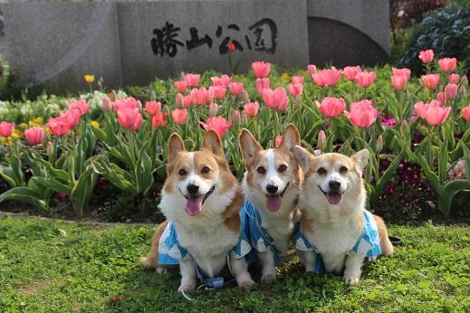 勝山公園 2016-4-2-1