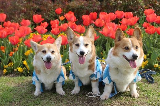 勝山公園 2016-4-2-2