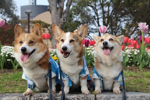 勝山公園 2016-4-2-3