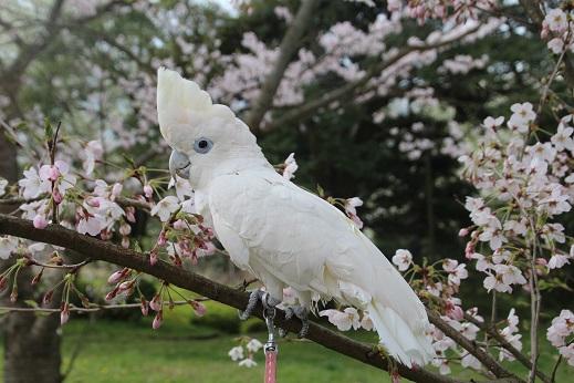 めかり公園 2016-4-3-6