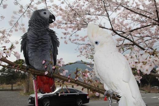 めかり公園 2016-4-3-7