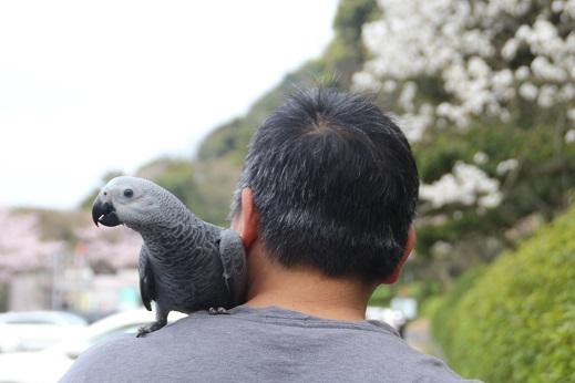 めかり公園 2016-4-3-8