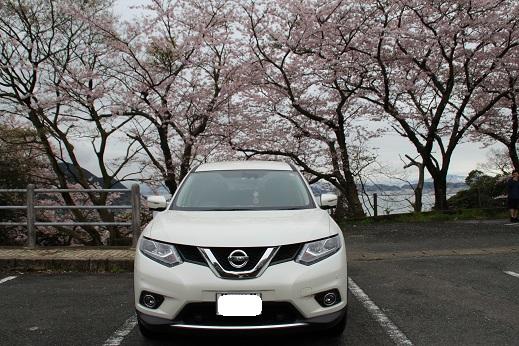 桜 2016-4-4-2