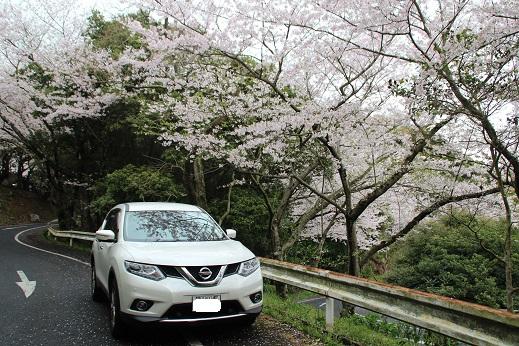 桜 2016-4-4-3