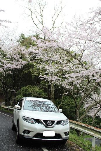 桜 2016-4-4-4