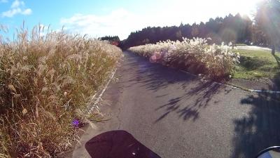 天竜スーパー林道ススキの道
