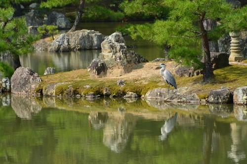 A heron in a serene setting at Kinkaku-ji