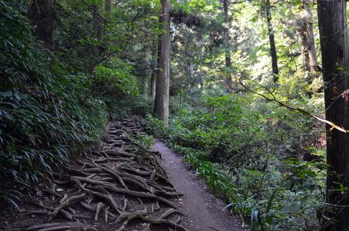 Hiking up Takaosan