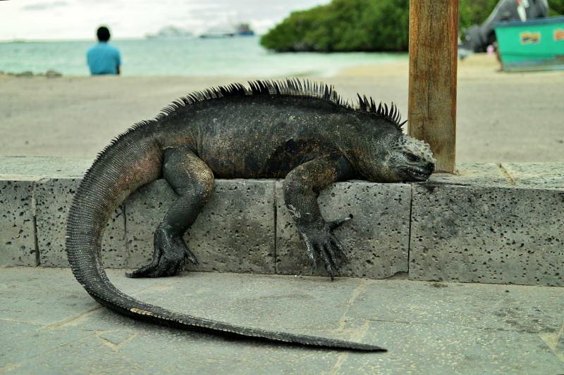 イザベラ島31