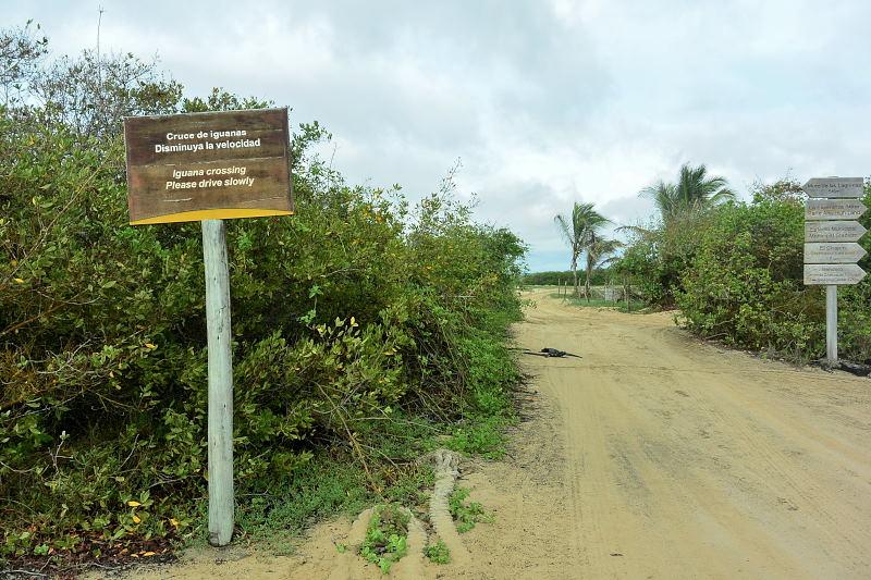 イザベラ島45