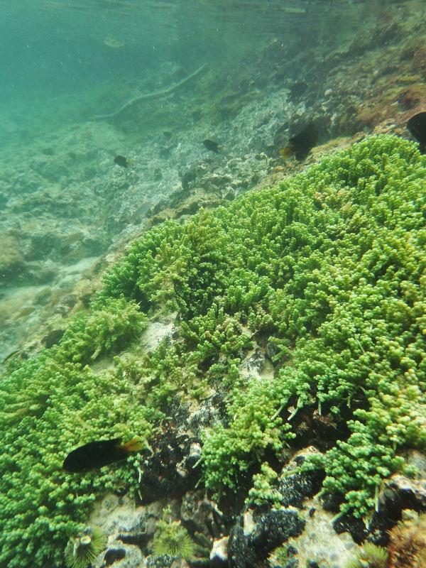 イザベラ島13