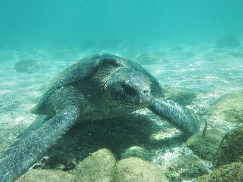 サンクリストバル島12