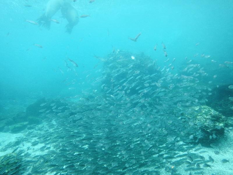 サンクリストバル島22