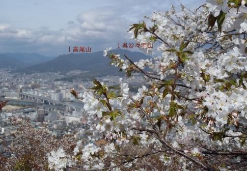 黄金山 006-001