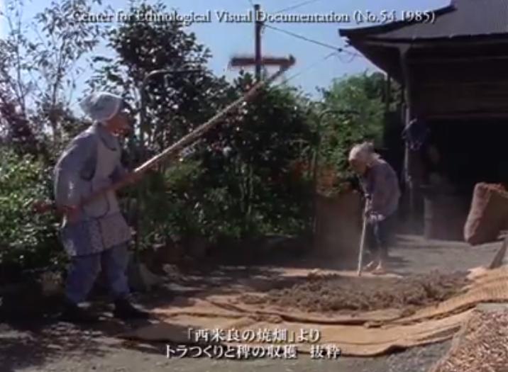 西米良の焼畑_ヒエ収穫・脱穀