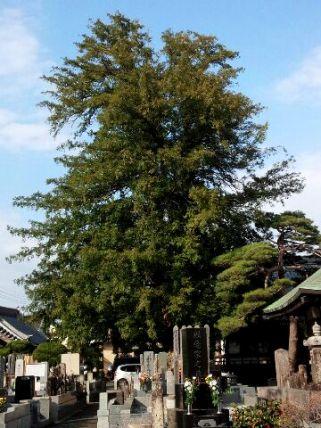 石田寺かやのき