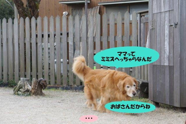 DSC00189_201603161958272b7.jpg