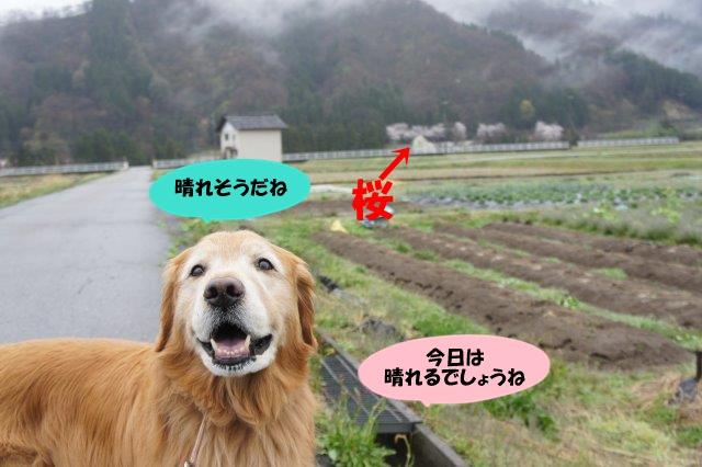 DSC00779_2016040822415669d.jpg