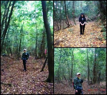 005 森林
