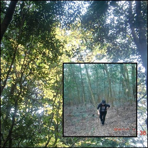 003 森林
