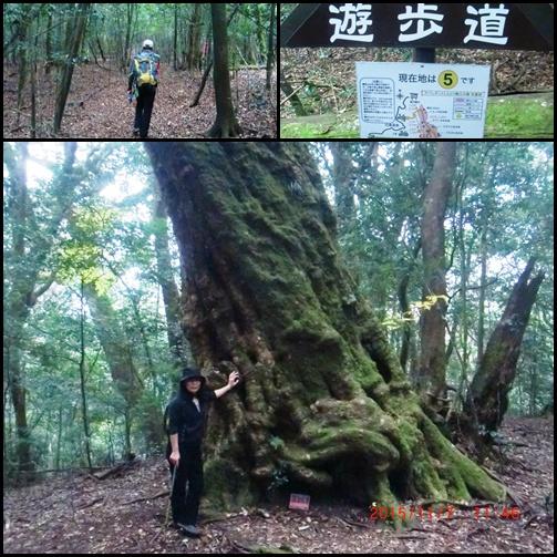 004 森林