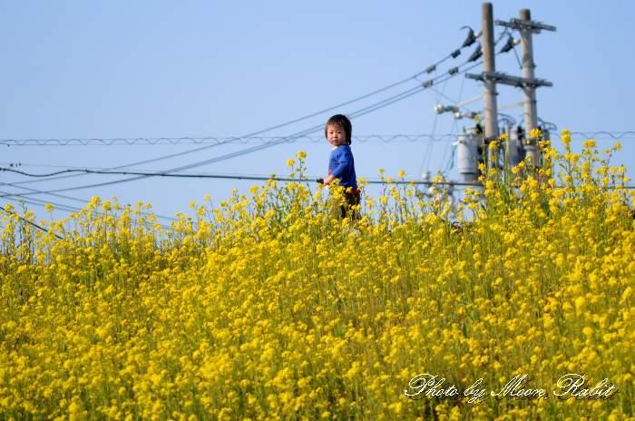 菜の花と子ども 愛媛県西条市古川
