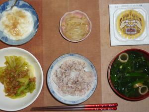 胚芽押麦入り五穀米,納豆,もやしのわさび醤油和え,キャベツと大豆肉の炒め物,ほうれん草とワカメのおみそ汁,甜菜糖入りヨーグルト
