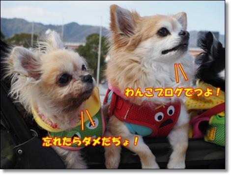 omdP3204515.jpg