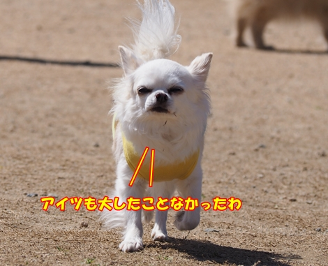 omdP3214652.jpg