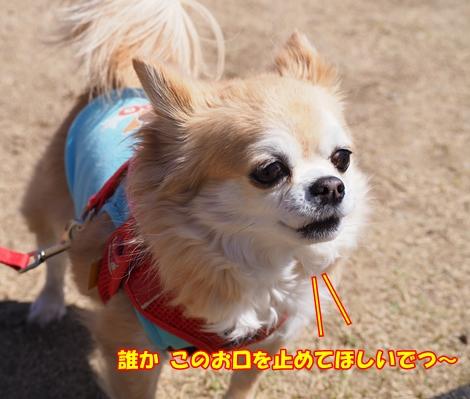 omdP3214681.jpg