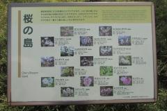 higashigyoen160327-110.jpg