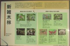 higashigyoen160327-141.jpg