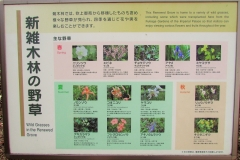 higashigyoen160327-142.jpg