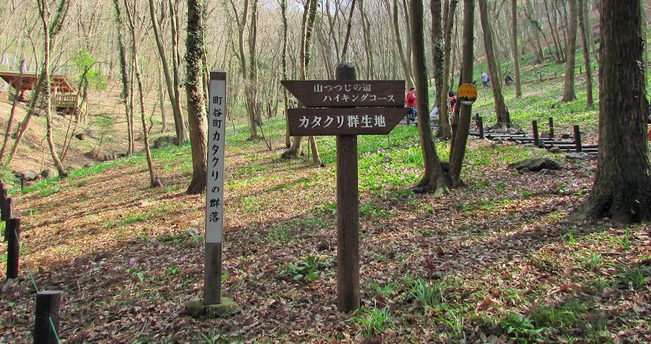 katakuri160320-114.jpg