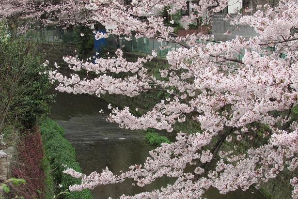shimizuyama160402-101.jpg