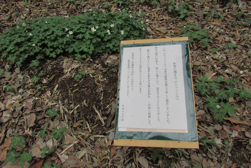 shimizuyama160402-106.jpg
