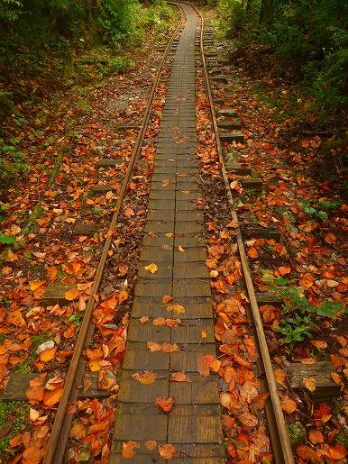 トロッコ道の紅葉(10月11日)