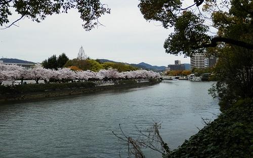 桜 川沿い