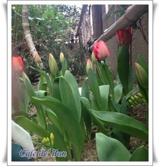 maehana1-crop1.jpg