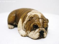 © 陽佳 2009「愛犬」DH000118.jpg