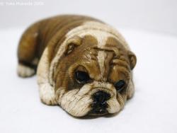 © 陽佳 2009「愛犬」DH000125.jpg