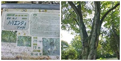 巨木NO4