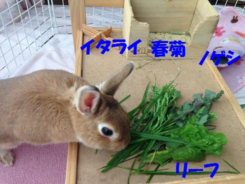 IMG_1402.お野菜