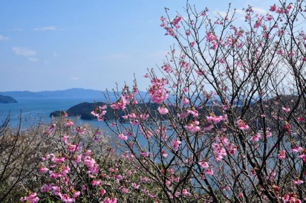 1陽光桜16.03.19