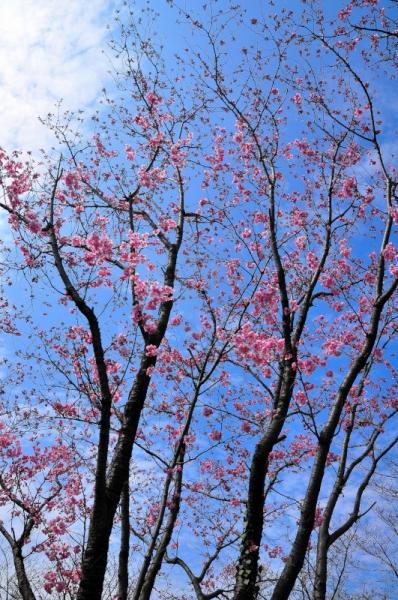 2陽光桜16.03.23