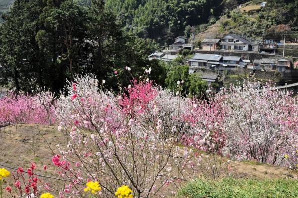 7寺村花桃の里